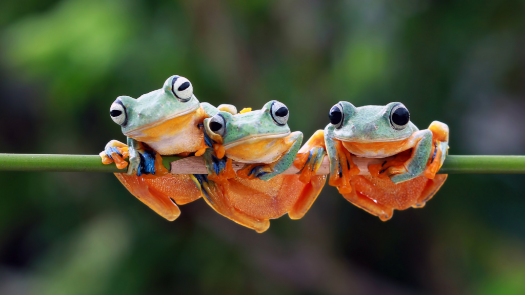 The Story of the Frogs